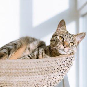 低至6折 + 额外8折Petco 精选猫爬树热卖 让猫咪在家拥有游乐场
