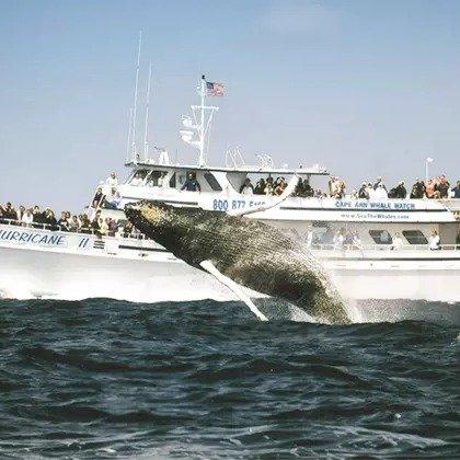 麻州格洛斯特 4小时观鲸游船