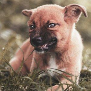 平均每周$20Petco 提供幼犬训练课程