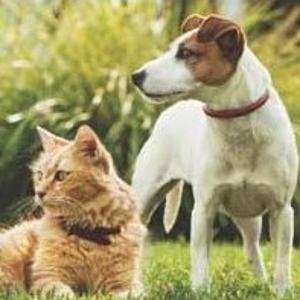 低至5.8折+首单额外5折限今天:Purina 精选猫粮狗粮大促销