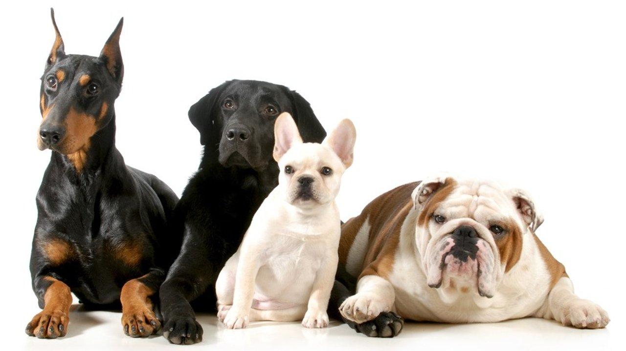 宠物犬科普:你适合养什么狗?不同品种狗狗性格、特点大揭秘