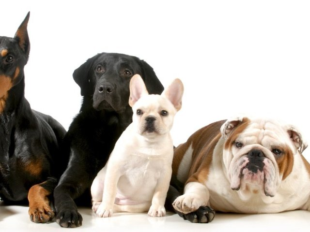 宠物犬科普:你适合养什么狗?不同品...