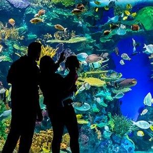 最受欢迎的溜娃好去处周末好去处:多伦多水族馆&动物园&美术馆 多景点恢复运营