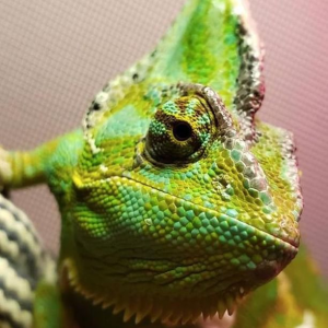July 20th, 11AMPetco Reptile Rally Event