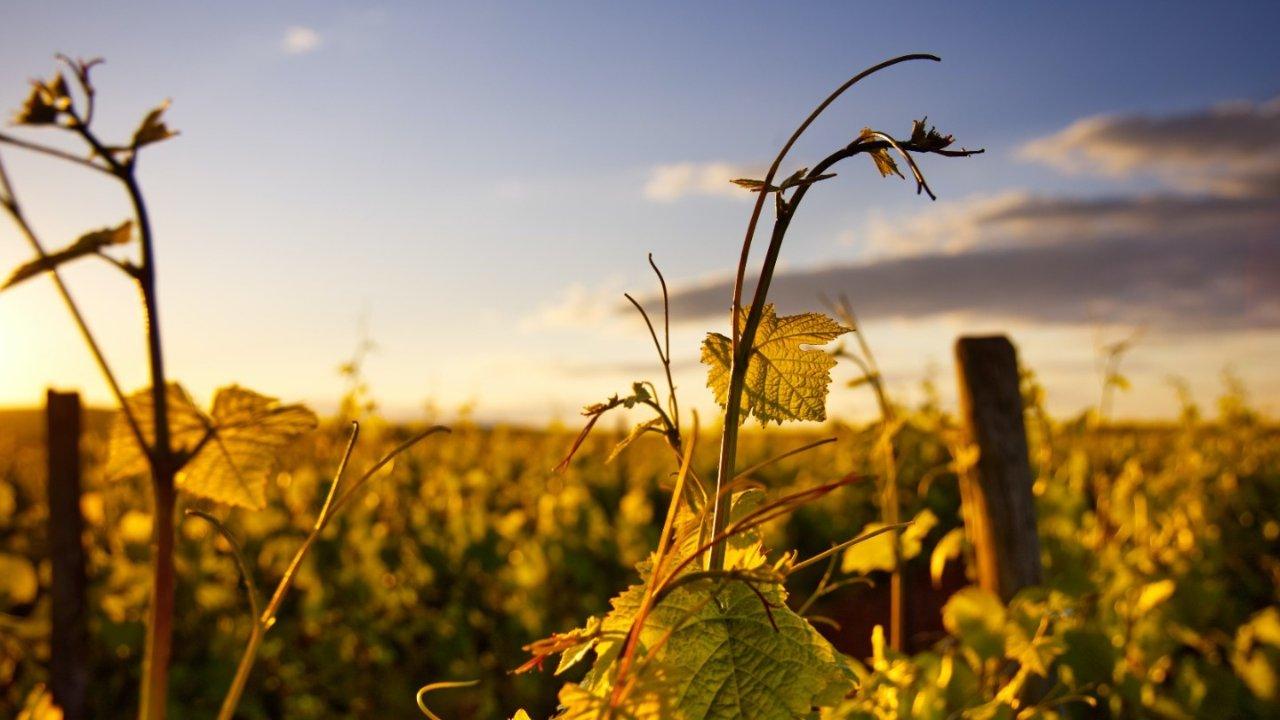 探寻法国5个最美的葡萄酒之路(La route des vins)|波尔多、勃艮第、香槟之路等