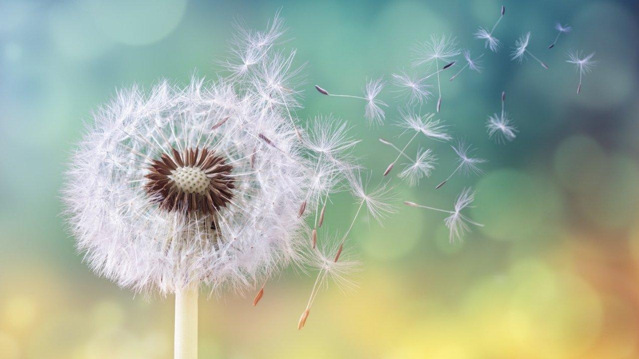 花粉症(Hay Fever)科普 | 花粉过敏症状、预防措施及常用非处方药