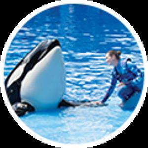 $73.99起圣地亚哥海洋世界 SeaWorld 门票促销 任一天门票立省$18