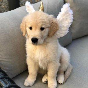 Unicorn Horn & Wings - The Mythical Mutt - Halloween Dog Costume – BarkShop