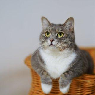 低至6折 + 额外8折Petco 精选猫砂盘促销热卖