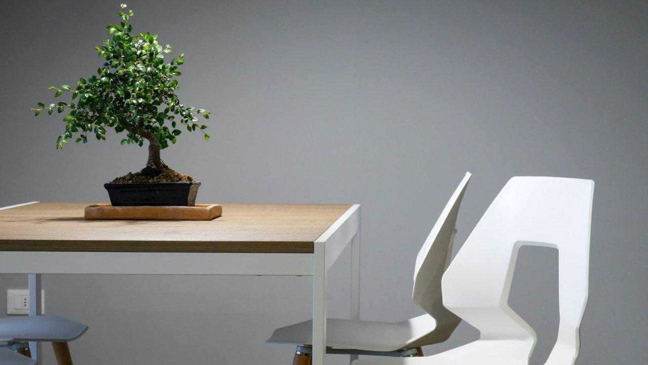 在法国可以找到的日式植物盘点,让你的家里充满日式风情!
