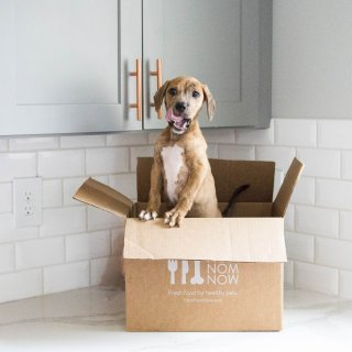 50% Off First OrderNomNomNow Freshly Cooked Pet Food Subscription