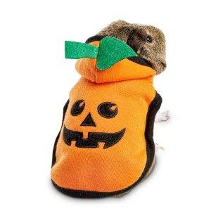BootiquePumpkin Bumpkin Small Animal Costume | Petco
