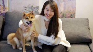 关于柴犬你所需要知道的一切   在美国如何挑选饲养柴犬-北美省钱快报 Dealmoon.com 攻略
