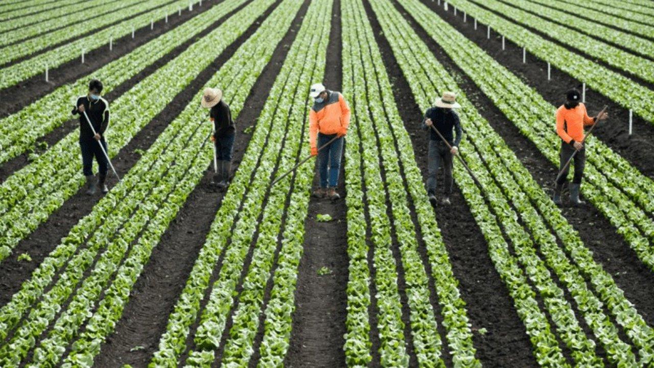 澳洲劳动力短缺,莫里森承诺会延长这3类人签证,可能还奖励$1200!