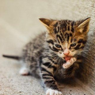 低至7.5折Petco 全场猫咪零食大促销
