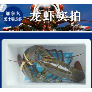 Canada Lobsters