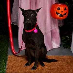 Up to 70% offSelect Halloween Costumes on Sale @ Chewy