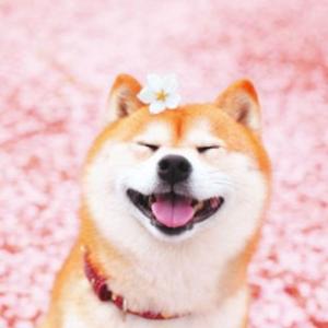 宠物智能尿垫招募众测,价值$170狗狗也有智能生活?从此铲屎不费劲