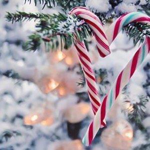 12月5日波士顿地区Easton Festival of Trees门票