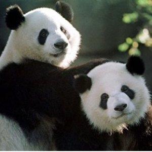 熊猫直播 免费观看