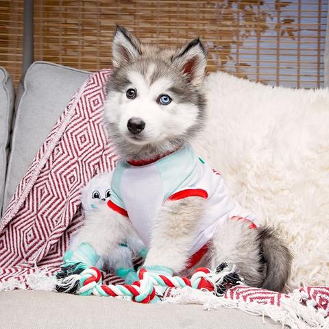 As low as $7.99PetSmart Pet Advent Calendar on Sale