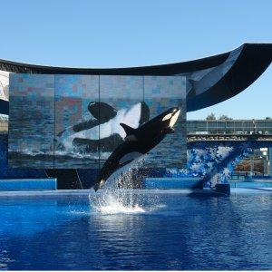 Buy One Get OneSeaWorld San Diego  Blue Friday sale@SeaWorld