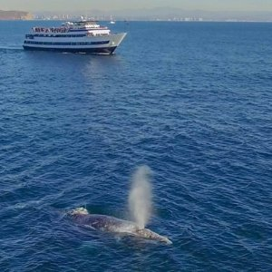 Whale Watching San Diego Tickets - Save Up to 55% Off