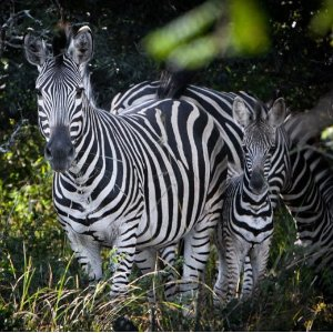 68折 Vuyani Lodge南非狂野之约5-7晚非洲Safari远距离观赏狩猎旅行 包含往返机票和5星级酒店