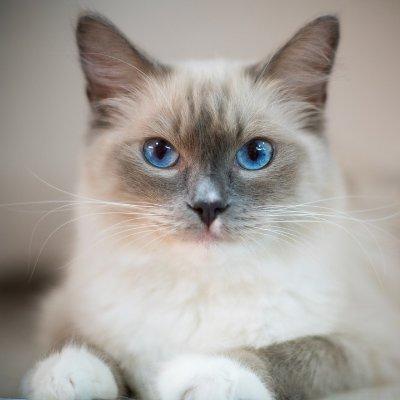 多款猫咪喂食器热卖,$7.76起