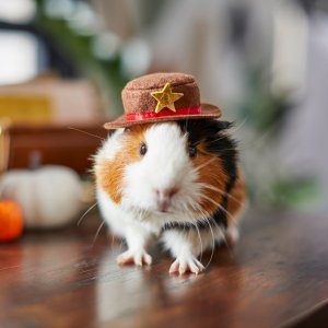 FRISCO Cowboy Guinea Pig Costume Hat, One Size - Chewy.com
