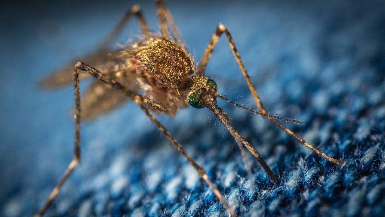 法国避蚊攻略全指南 防蚊和止痒都有,有了这些神器,再也不怕蚊子了!