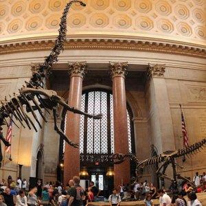 宅家观展 探秘神奇自然界美国自然历史博物馆 免费线上观展、教学视频、线上游戏等