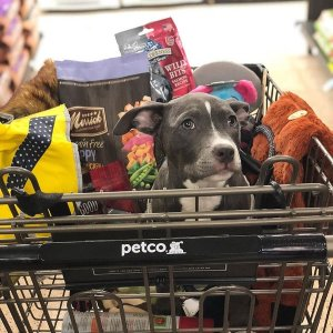 FreePound of Dog Treats @ Petco