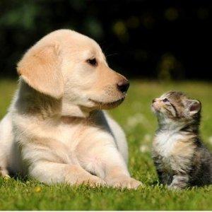 低至7折 皇家狗粮心动好价宠物也需要屯物资 特殊情况宠物用品折扣专区