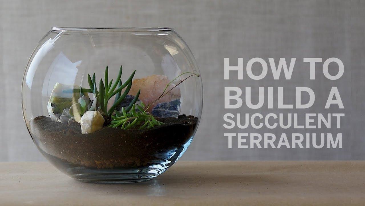 一起做一个多肉的玻璃盆景吧 | succulent terrarium攻略!