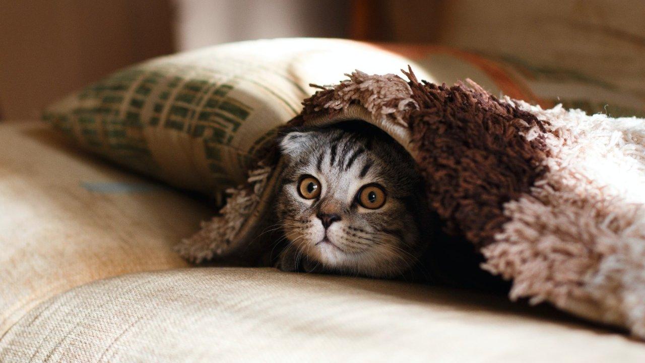 法国猫咪绝育指南!绝育原因、价格、类型、地址等全盘点!
