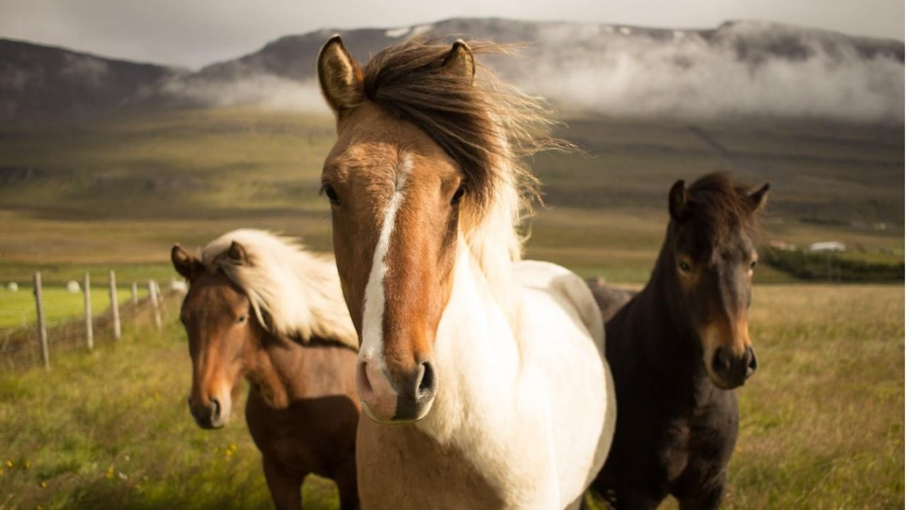 在加拿大怎么办理冰岛(申根)签证?一篇攻略帮你安排的明明白白!