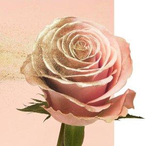满额送10件小样 包括小黑瓶Lancôme官网 限量玫瑰花瓣复古闪粉热卖