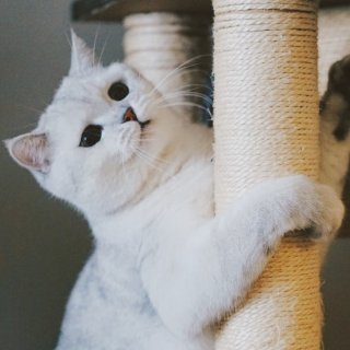 Up to 71% OffPetco Selected Cat Trees & Towers on Sale