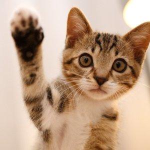 £8起 无限热饮Cat Cafe 撸猫咖啡馆折扣回来啦