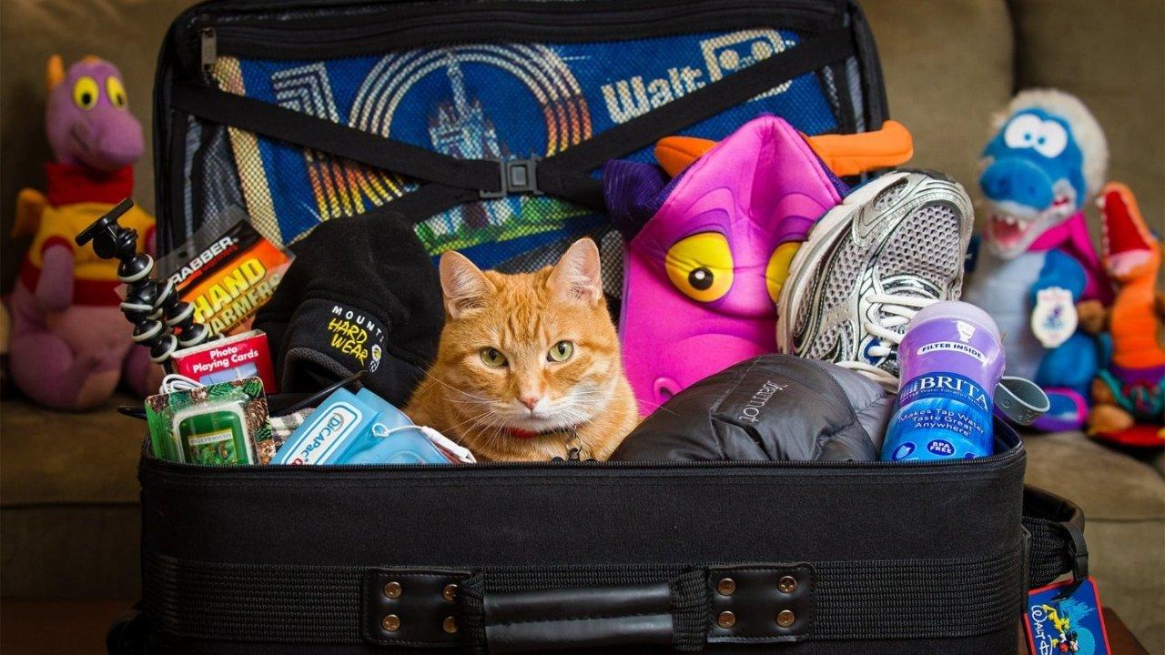 2021英国新生季 | 英国留学必备行李清单,跟着这篇准备就够了~