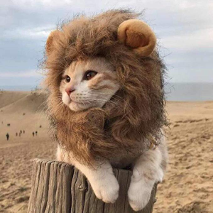 $17.97Pet Krewe Lion Mane Cat & Small Dog Costume