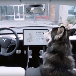 汪 狗模式开启二哈福音 Tesla 公布全新功能