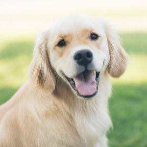 Petco Pet Flea & Tick Solutions on Sale Up to 45% Off - Dealmoon