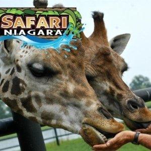 2人票仅$47.5(原价$78.88)Safari Niagara 野生动物园开园啦~ 快去和小动物们见个面吧!