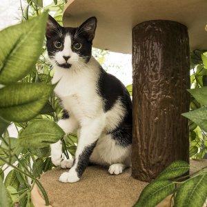 25% OffOn2Pets Cat Tree on Sale