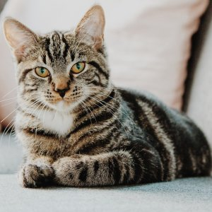 Up to 45% OffPetco Selected Cat Flea & Tick Treatment on Sale