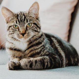 低至5.5折 + 额外8折Petco 精选猫咪驱虫药品、用品促销