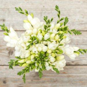 白色小苍兰花束