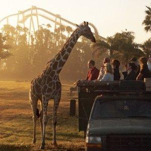 一日票$102.99起 含全天餐食佛州坦帕湾 Busch Gardens 主题乐园门票 可选海洋世界
